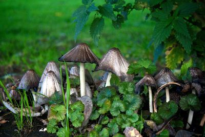 mushrooms in field
