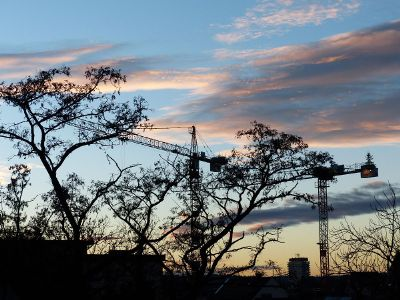 beautiful crane