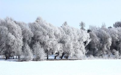 a forest in winter