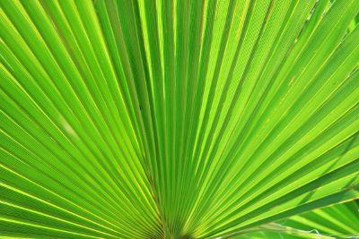 a closeup shot of green leaves