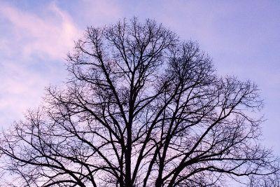 giant leafless tree in purple sky