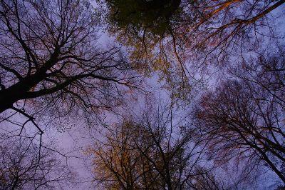 an upshot of trees