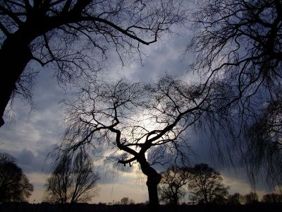 evening sky with tree silhouettes