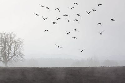 birds flying in mist