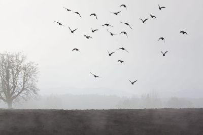 birds flying in mist