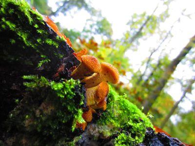 mushrooms on mossy tree