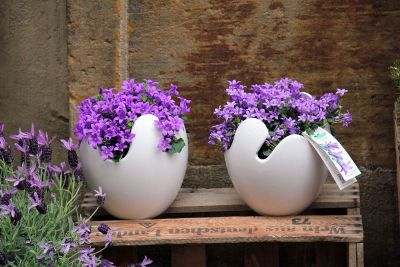 ornamental in pots with matching colors