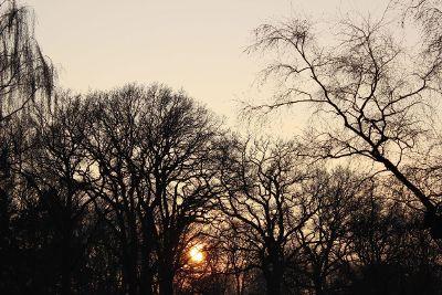sunset silhouete