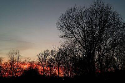 crimson sunset through trees