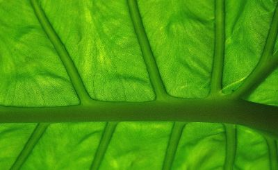 macro photograph of green leaf structure