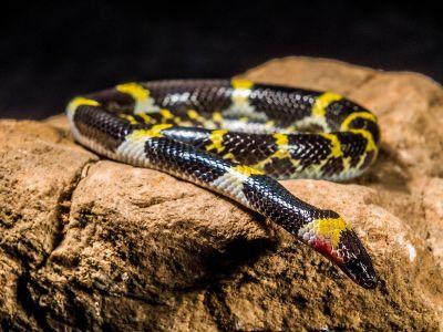snake in a rock