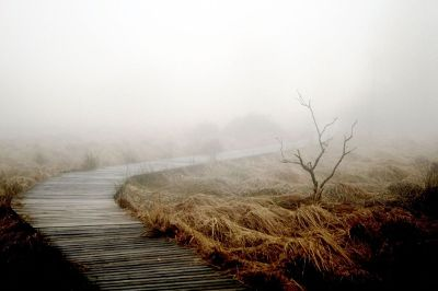 wooden sidewalk through foggy marsh