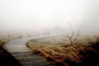 wooden sidewalk through foggy marsh