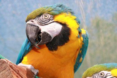 parrots on wood