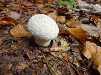white mushroom on forest floor