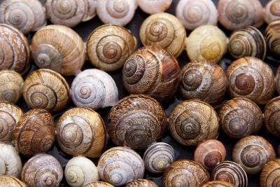 rows of snails