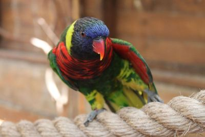 parrot on rope