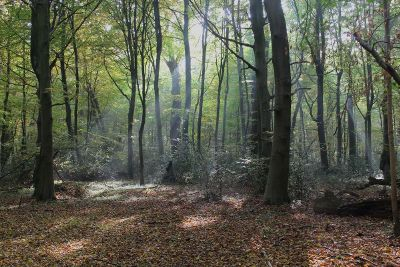 dense forest with streaming low light
