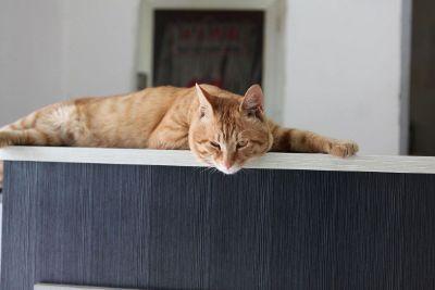 an orange cat laying down