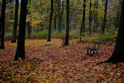 bench in the forest in fall