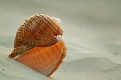 empty shell in the sand