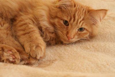 cat pose