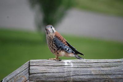 bird looking surprised