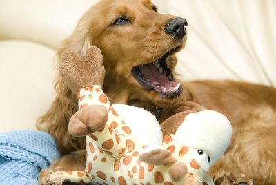 golden dog with giraffe toy