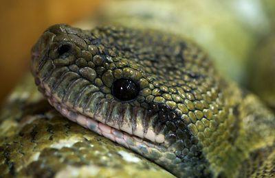 calm snake