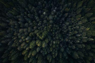 treetop tops