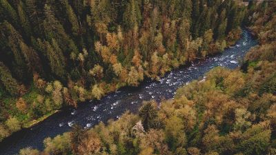 river though a forest