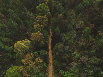 a dirt road has been cut through a forest