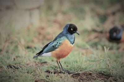 determined little bird
