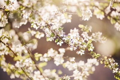 white vine flowers