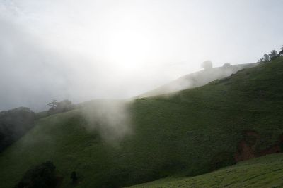 fog on rolling green hills