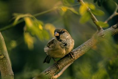 a bird on a tree