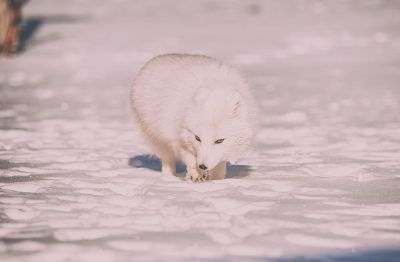 snow fow