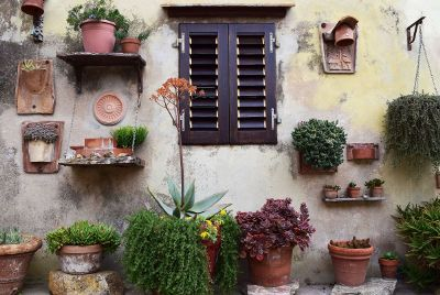wall with potted plants