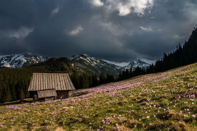 cabin in a meadow