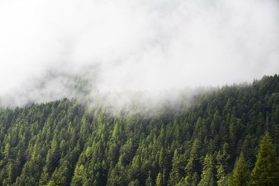 evergreen forest and clouds