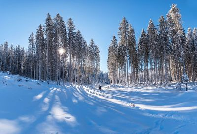skiing in snowy forest