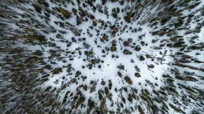 arial view of trees
