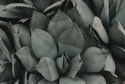 dark prickly plant