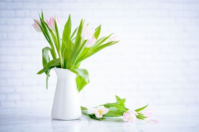 white pink tulips in vase