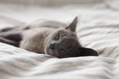 gray cat sleeping on bed