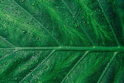 a dew covered leaf
