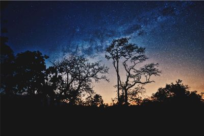 the milky way over trees