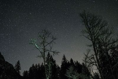 stars and trees at night