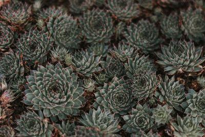 interesting plant