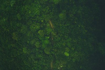 ariel view of a forrest